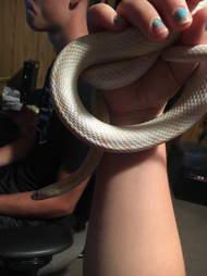snake found in dumpster