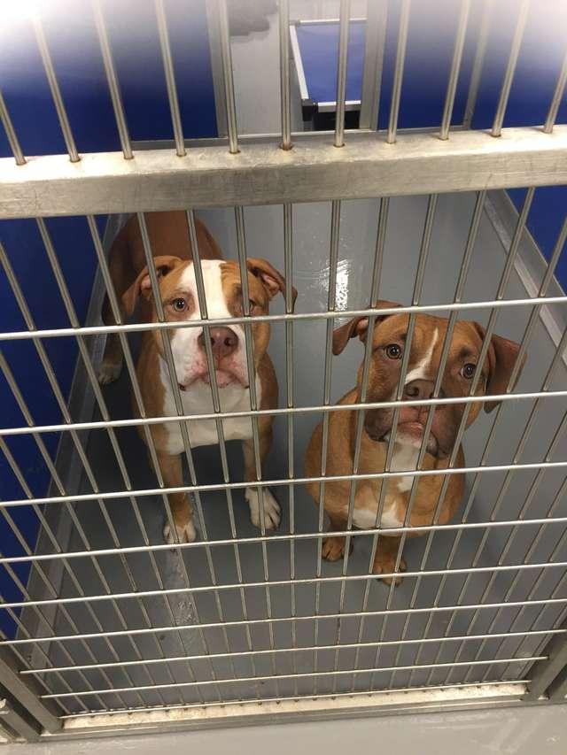 dog food, dog walker, dog cage, barkbox, petco pitbull