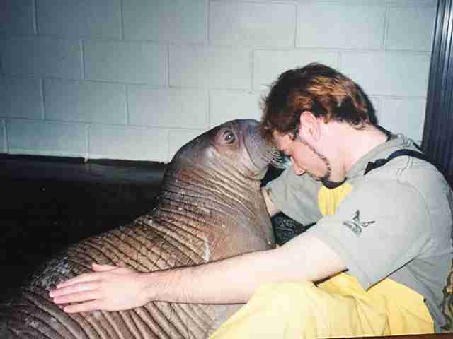 Man cuddling with captive walrus