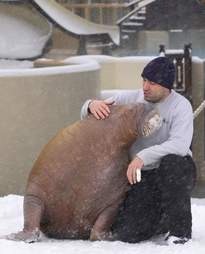 Phil Demers cuddling with Smooshi the walrus