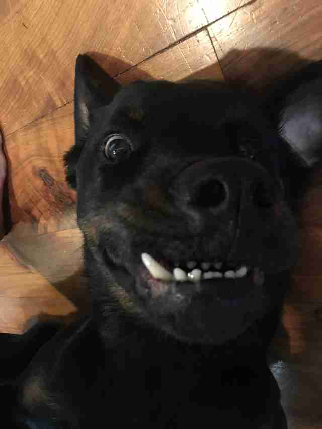 Dog with pronounced underbite lying on floor