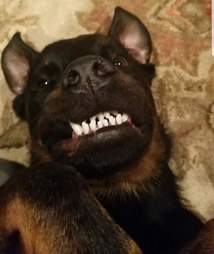 Dog with pronounced underbite