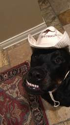 Dog with funny teeth wearing a hat