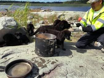 Feeding the puppies