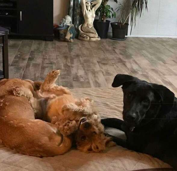 7 rescue dogs and their toddler beds
