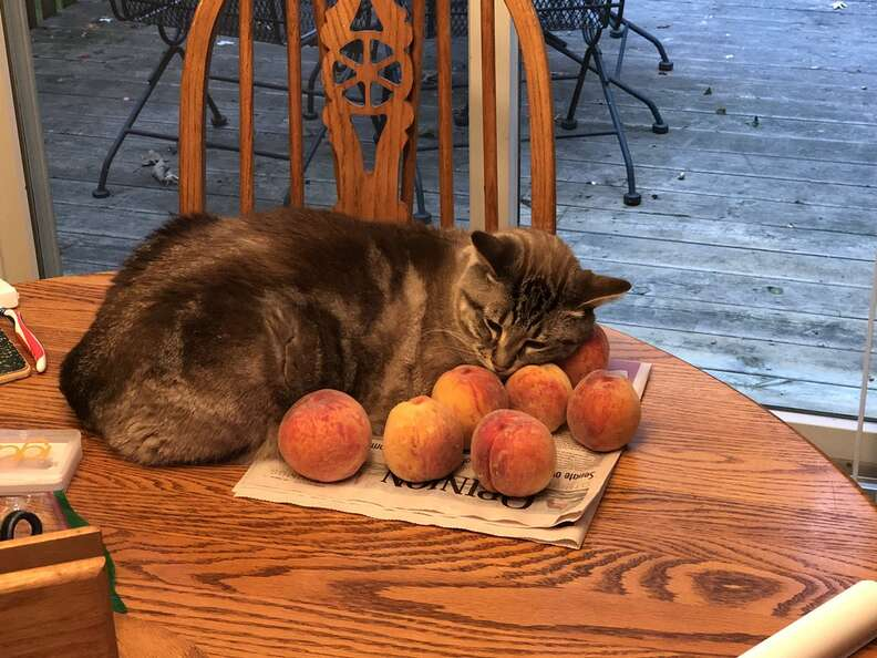 Ozzy the cat who loves peaches