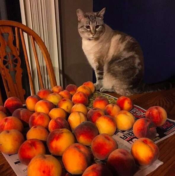 Ozzy guards his peaches