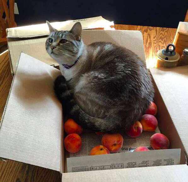 Ozzy sleeps in a box of peaches