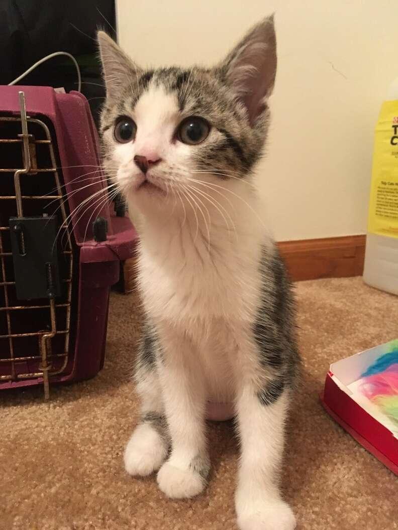 not a cat person adopts a kitten