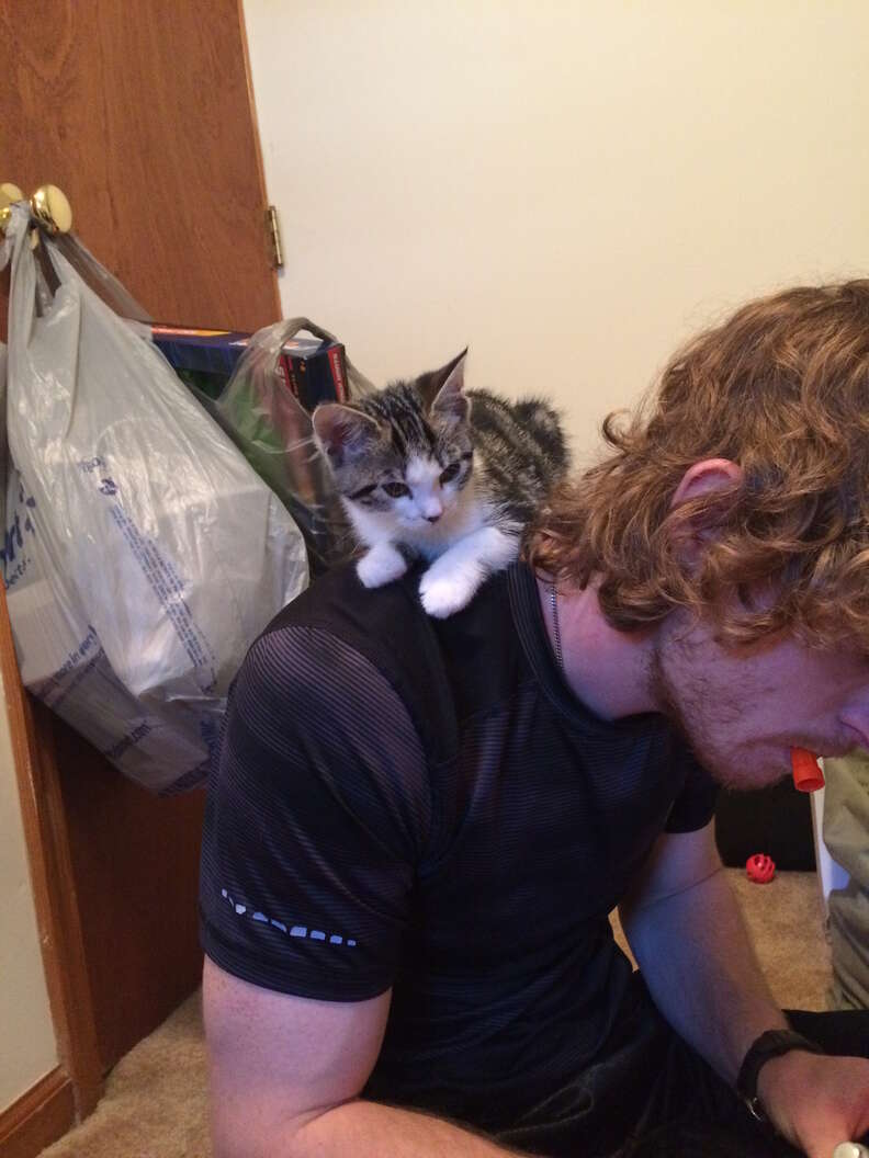 not a cat person guy adopts a kitten