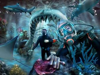 shark dive swim aquarium