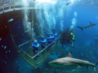 shark dive tank bear grylls