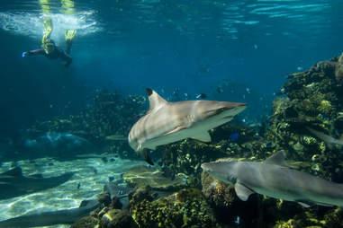 shark dive tank