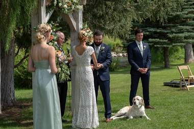 Dog sitting on ground during wedding ceremony