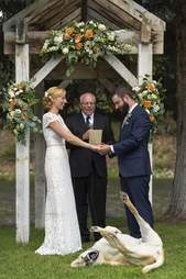 Dog rolling around during wedding