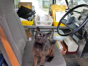 Bijou the cat gets on the seat of the mail truck