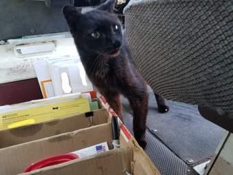 Bijou sniffs some mail