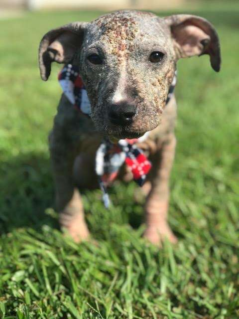 Puppy with mange standing in grass