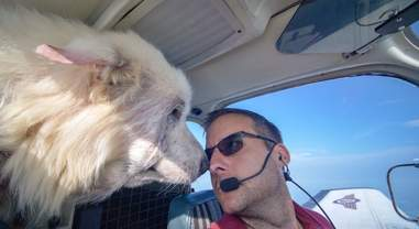 Woody the rescue dog flies to freedom
