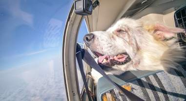 Woody looks out the plane window during his freedom flight