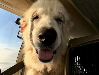 Woody's freedom flight to an animal rescue