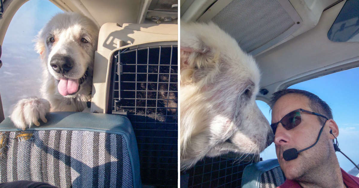 Dog On His 'Freedom Flight' Is Too Excited To Stay In His Seat