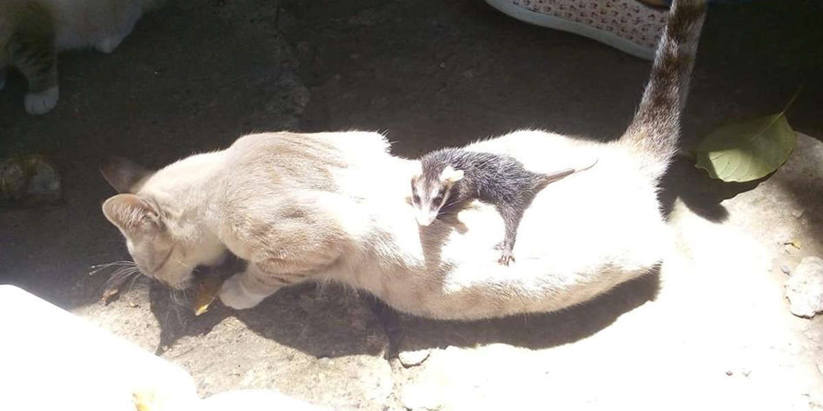 Little Kitten Comes Home One Day Carrying A Strange Baby On Her Back