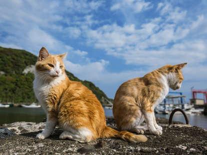 cat island job