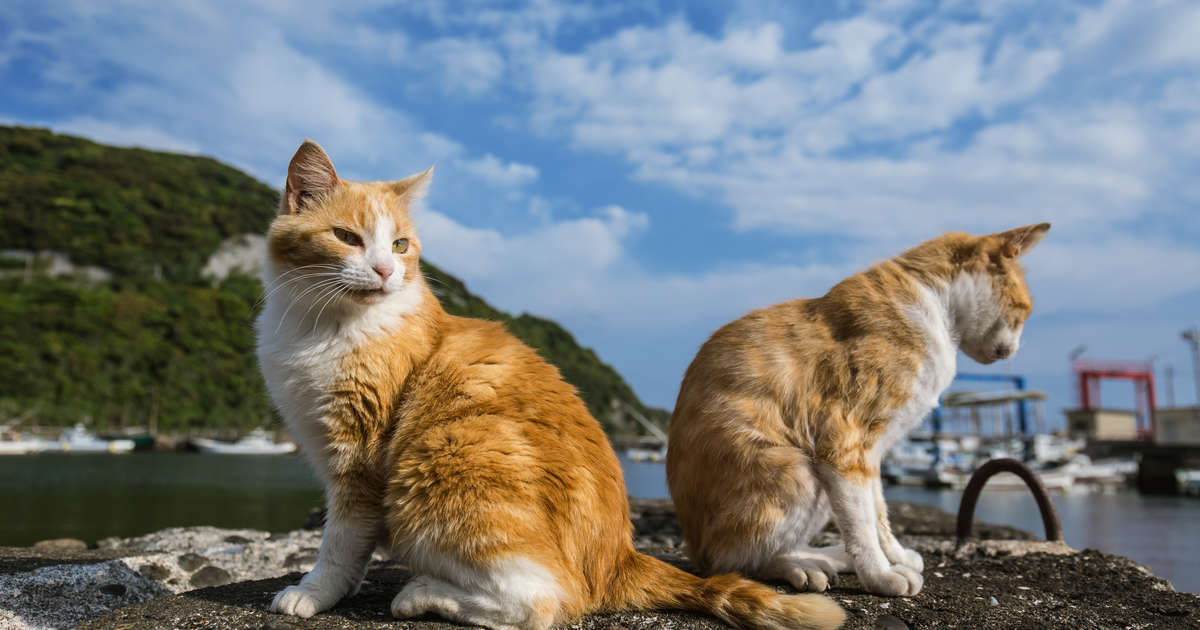 You Can Get Paid to Live on a Greek Island and Care for 55 Cats