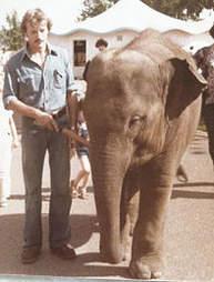lonely zoo elephant