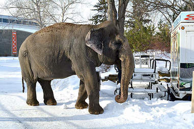 lucy lonely zoo elephant