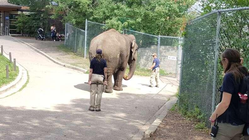 zoo elephant lonely