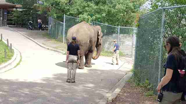 zoo elephant lonely