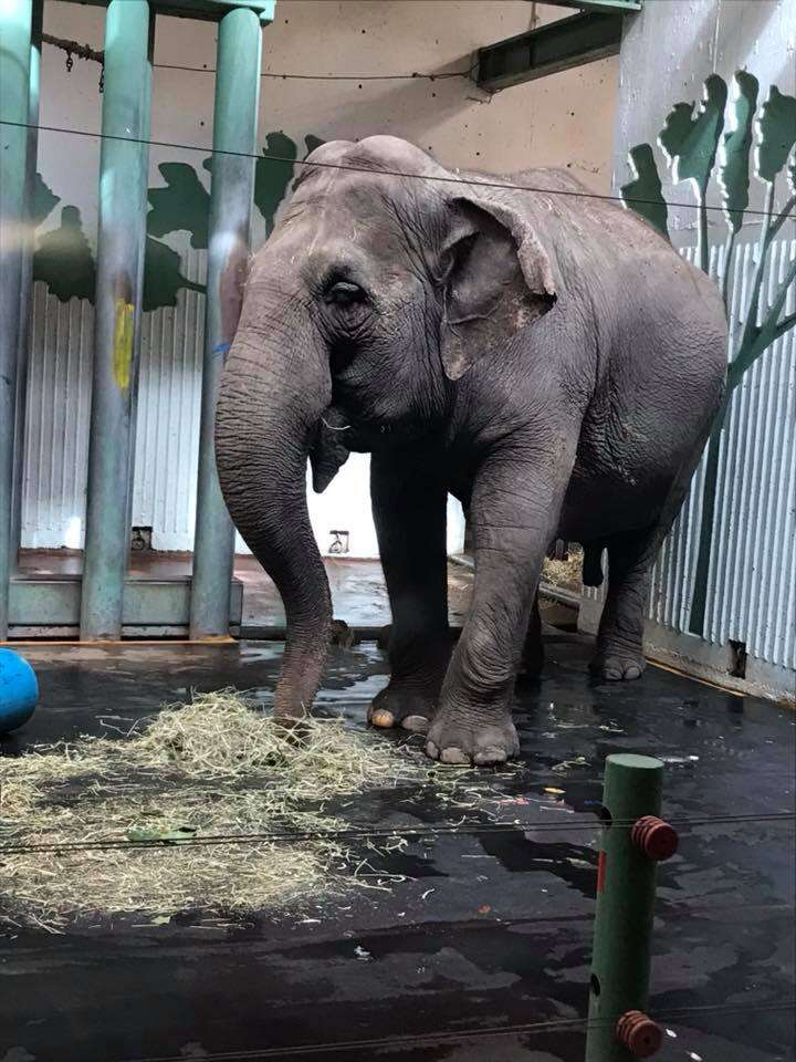 lucy lonely elephant