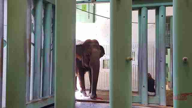 lonely zoo elephant