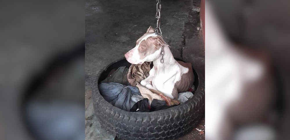 Dog Kept On Shortest Chain Couldn't Even Rest Her Head