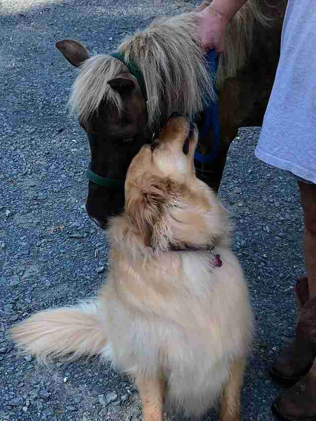 Molly meets Sammie the mini horse