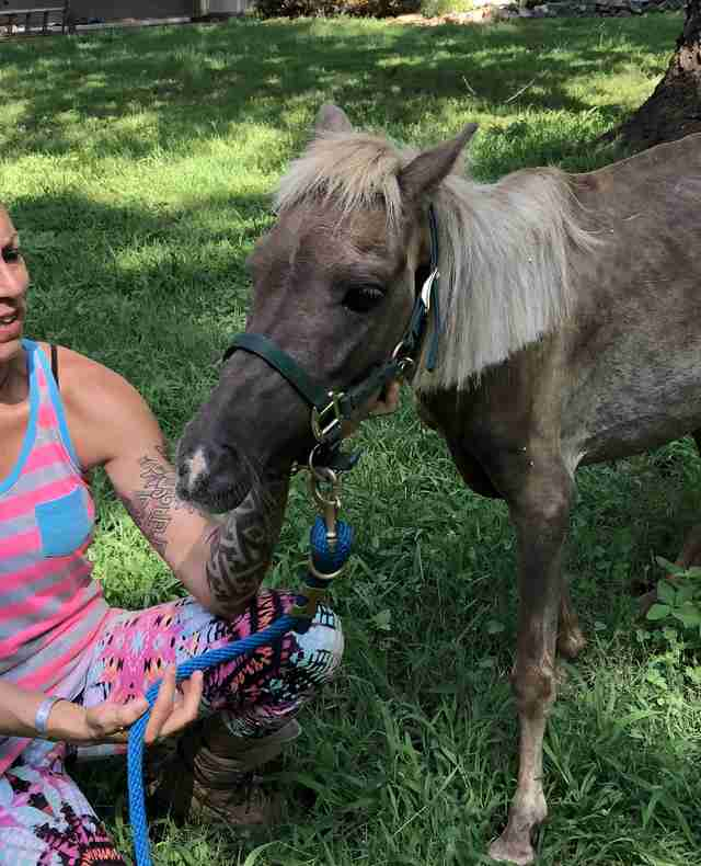 Sammie the mini horse at Carolina Animal Rescue and Assistance