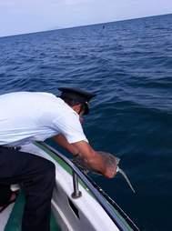 Man setting sea turtle free