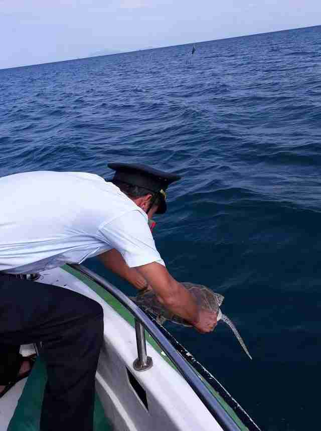 Man setting sea turtle free