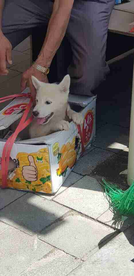 Puppy poking his head out of box