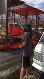 Woman touching dogs in cages