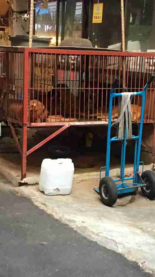 Dogs in cages at meat market