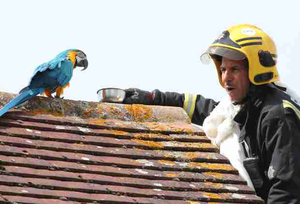 Foul-Mouthed Parrot Stranded on Roof Tells Rescue Brigade to 'F*ck Off'