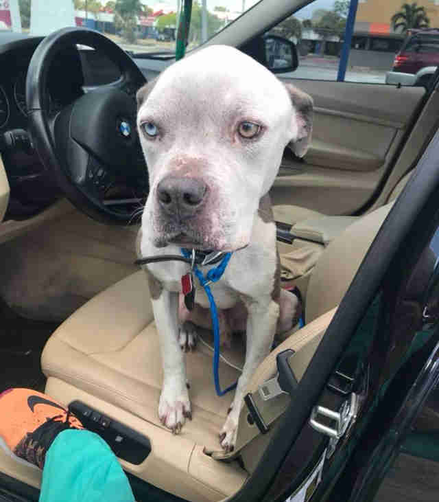 Emaciated dog in front seat of car