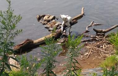 Dog tied to a log in the Erie Canal