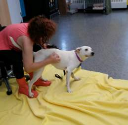 River the rescued dog gets pets from shelter workers