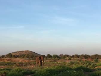 Bull elephant in Kenya
