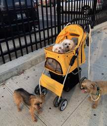 Astrid out in New York with her foster family