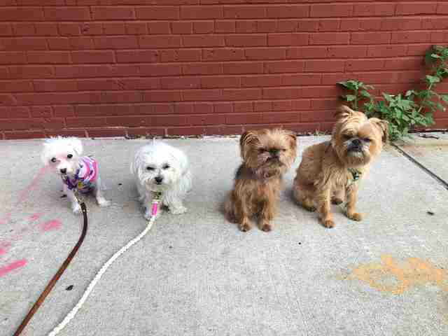 Astrid and her three rescue dog friends at her foster home